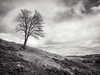 Tree on the Hill (strachcall) Tags: landscape monochrome balmaha lochlomondtrossachs scotland tree sky blackwhite bw blackandwhite conichill clouds