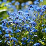Blue Jungle thumbnail