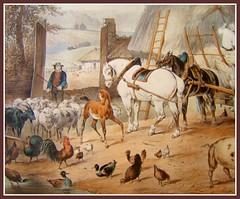 Le tableau encadré (MAPNANCY) Tags: animaux cheval poulain coq poules chèvre canard mouton
