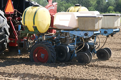 Peanut Planting 3 (UGA College of Ag & Environmental Sciences - OCCS) Tags: uga tifton campus peanuts planting