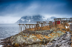 Wooden Logs Constructions For Cod Drying Arranged Along Seashore in Hamnoy Fishing Village in Noway. (DmitryMorgan) Tags: norway norwegian panorama scandinavia arctic bay coast environment europe fjord hamnoy harbor house hut isle light lofoten lofotenislands mountains nature nopeople noone ocean outdoor picturesque polarcircle red reddish reine reinefjord scenery scenic seascape snowy traditional traveldestination travelling village water