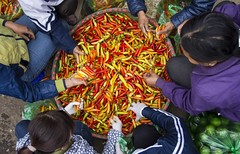 chili 🌶 (Greg Rohan) Tags: asia vietnam vegetablemarket vegetables orange yellow red peppers morning hanoi markets longbienmarket chili photography 2017 d7200