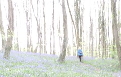 A walk in the Bluebell Wood (Feathering the Nest) Tags: sooc blur overexposure bluebellwood walk walking