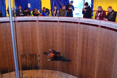 wall of death daredevil (Jamesedwardskk) Tags: 2 wall death for help motorcycle british heroes suzuki bandit federation 600c