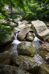 Up a Chinese Creek Without a Paddle (Universal Stopping Point) Tags: china bridge trees mountain green creek rocks stream footbridge boulders brook flowing lush lushan