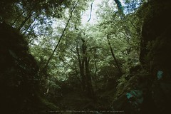 japanese forest (Inoue M) Tags: green japan forest canon japanese 5dm2