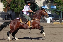 IMG_9817 (RafaelSan) Tags: horse caballos gaucho criollos