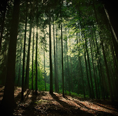 Forest in Czech Republic (sole) Tags: trees light green nature forest ilovenature bomen woods europa europe czechrepublic bos tsjechi krkonoe lostinaforest