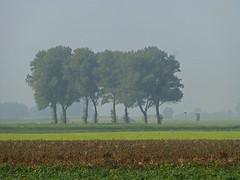 Befogged Trees (RainerSchuetz) Tags: trees mist fog geotagged day blinkagain bestofblinkwinners blinksuperstars geo:lat=5337609444 geo:lon=610637778