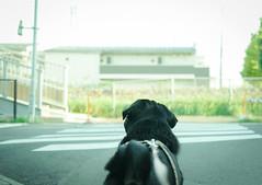 (e_haya) Tags: pug sonynex5