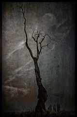 Night tree (Vanessa Vox) Tags: landscape nighttree texturesquared magicunicornverybest magicunicornmasterpiece vanessavox