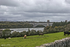 Brittania bridge (jeffadams1) Tags: bridge wales north menai brittania anglesey robertstephenson straights francisthompson