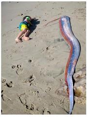 Oarfish.KABC_1 (Patterns and Light) Tags: oarfish