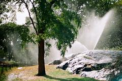 (september.) Tags: autumn film water 35mm shiny rocks centralpark spray sprinkler canonae1 watering schist canonfd50mmf14 canonfd kodakektar100