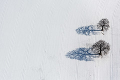 Oak Pair (Aerial Photography) Tags: schnee winter shadow snow by landscape la oak mood aerial landschaft schatten stimmung luftbild leaftree eiche luftaufnahme ndb laubbaum deciduoustree vilsheim foliagetree fotoklausleidorfwwwleidorfde unterfroschham 02032013 vision:mountain=0656 vision:outdoor=0986 vision:sky=0707 5d325434