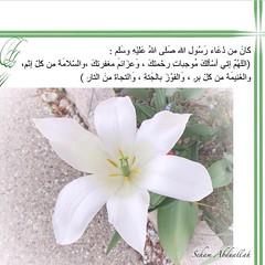 prophet mohammed duaa (nooralkalemat) Tags: islam religion mohammed   duaa       hadeeth