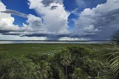 Tropical Storm - Pantanal (J.C. Arieira) Tags: brazil storm rain brasil landscape chuva paisagem matogrosso tempestade pantanalmatogrossense arieira