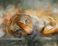 Detroit Zoo Bengal Tiger (snapnpiks) Tags: auto portrait orange abstract color art colors animal pen pencil ink photoshop painting zoo sketch artwork dynamic bright drawing expression strokes vibrant stripes tiger fine illustrations brush canvas textures virtual pastels painter oil editor watercolors bengal rendering gmx pallete restorations smartphoto painter5 smackman snapnpiks photopainter21 vision:mountain=0768 vision:outdoor=0768