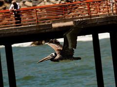 @ Chile (ezeyhomero) Tags: chile valparaiso muelle dock verano pick caletaportales