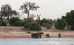 Chobe Moments (AnyMotion) Tags: africanelephant afrikanischerelefant loxodontaafricana water wasser chobe river fluss landscape landschaft landschaftaufnahmen 2008 chobenationalpark botswana anymotion africa afrika animal animals tiere nature reisen travel wildlife npc