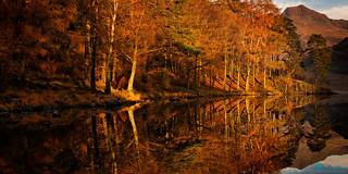 Golden Light Golden Trees