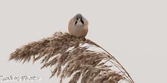 baardmannetje angry bird :p