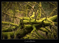 comfort blanket (tiggerpics2010) Tags: scotland nature westhighlands woodland moss mossy trees growth life green river