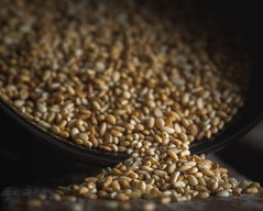 says me seeds (auntneecey) Tags: seeds saysmeseeds sesame macro macromonday 365the2017edition 3652017 day107365 17apr17 odc uncountable
