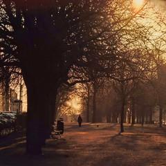 Golden dawn in Helsinki (Kimmo Räisänen) Tags: panasoniclumixdmcfs50 trees silhouette park dawn sunrise golden helsinki finland scandinavia spring pointandshoot streetphotography