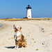 Laika at Edgartown Lighthouse | Martha's Vineyard, USA