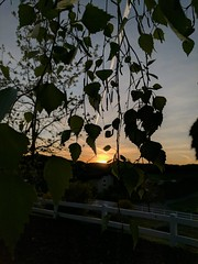 Morning Has Broken (DirtyBootPrints) Tags: morning am colorful art color pop watch wait see dawn sunrise sunshine adventure birth alive west california aspen artistic beautiful beauty bright clouds ca desert dream awake sky shine spring sun summer trees tree time trail open horizon home hope pacific peace pov poetry