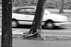 © Inge Hoogendoorn (ingehoogendoorn) Tags: fiets fietsen straatfotografie fietswrakken bike bikes bikeparking dutchbikes dutchbike blackandwhite blacknwhite movement beweging