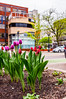 116:365 - A City Building (LostOne1000) Tags: cy365 flowers cloudy 365the2017edition iowa beforetherain 116365 traffic streetlights trees citybuilding day116365 soil pot 26apr17 cars 3652017 unitedstates cedarrapids downtown tulips us