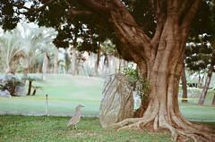 000373940016 (Nai.) Tags: expiredfilm lomographyiso100 colornegativefilm 135film pentaxmz3 slr naturalcolors plants green trees