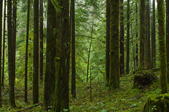 Near a Ravine (Kristian Francke) Tags: forest bc canada british columbia nature natural outdoors green moss wet cloud fog edge ravine landscape pentax winter march 15 2017