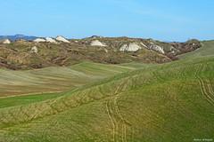 Deserto di Accona (Darea62) Tags: desert accona landscape tuscany hills cretesenesi toscana panorama biancane nature grass field cultivation agriculture