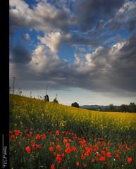 Spring... (Felip Prats) Tags: spring primavera sky nwn