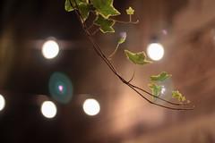 Night In Dublin (minna-L) Tags: bokeh lights trees leaves nighttime nightshot branch dublin ireland canon 60d smooth blur