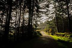 Let's Go (A Costigan) Tags: path camhino light woods walking hiking ireland