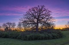 "The ""tree"" (Ulrich Burkhalter) Tags: 20170409 lexingtonky thetree sunrise"