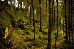 Small forests (sirenajing) Tags: myrafälle forests plants trees trip weekendtrips travel ausflug tourism leisure freetime springtime spring nature outdoors woods green relaxing fun quiet save earth