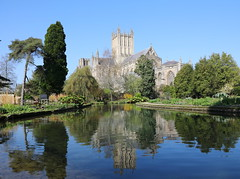 Wells Cathedral (Mukumbura) Tags: wellscathedral bishopspalace gardens pool well spring wells somerset england britain unitedkingdom uk church cathedral trees blue sky clear weather reflections beauty religion architecture buildings water moat lake tranquility peacefulscene peace quiet magnificent grandeur reflection reflected symmetry
