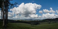 look east (dustaway) Tags: landscape australianlandscape edencreekvalley nsw australia northernrivers richmondvalley trees pasture ruralaustralia clouds cloudscape cumulus