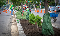 2017.04.29 Vermont Ave Garden-Work Party Washington, DC USA 4174