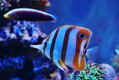 Fish (Hugo von Schreck) Tags: hugovonschreck fish fisch canoneos5dsr fantasticnature tamronsp35mmf18divcusdf012 germany mehlis thüringen deutschland