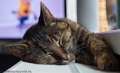 Musti_Sleep