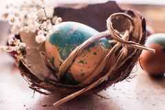Easter is here (Jenny Karakasheva) Tags: egg eggs coconut easter blue flowers snuggle macro closeup spotted colours colourful sweet celebrate shell