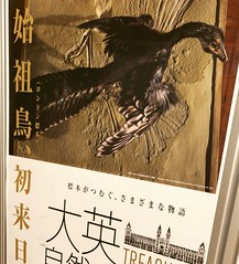 始祖鳥 画像12