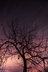Purple Night Sky (rudolphfelix) Tags: night sky astronomie astro astrofotografie astronomy nacht natur nature nightsky nachthimmel nightlife stars sterne clouds dynamic langzeitbelichtung longexposure canon eos 600d colorfull lightroom magic landscape landschaft himmel germany german deutschland felix rudolph fotografie photografie deep dark dunkel image outdoor photo photography tree baum dorfgemeinschaft tennental