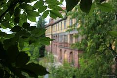 through the shrubs (Urban Tomb Raider) Tags: urbex urbanexploration decay abandoned abandonedhospital abandonedlungsanatorium urbandecay beautyofdecay urbexgermany canoneosm